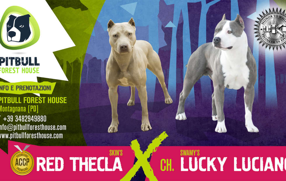 PITBULL FOREST HOUSE THECLA x LUCKY hd res