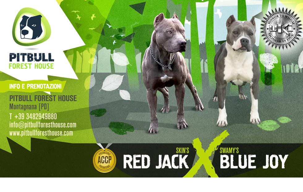 LOCANDINA Breeding 3 JACK X JOY