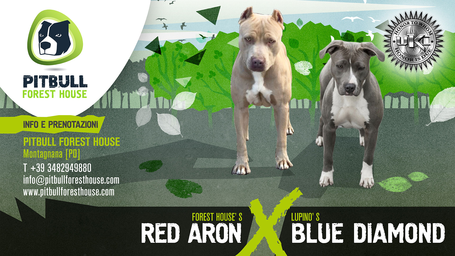 Forest House Red Aron x Lupino Blue Diamond